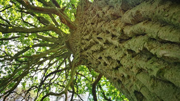 Tree Growth Nature Low Angle View Green Color Beauty In Nature Day No People Outdoors Branch Tree Trunk Tranquility Backgrounds Sky Przyroda Life Litwa Lietuva Lithuania Flora Close-up Beauty In Nature Nature
