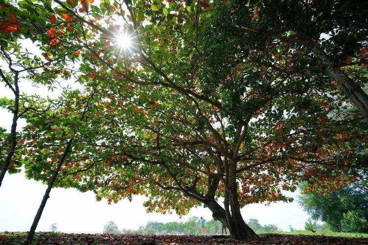 Sunbeam Sun Tree Lens Flare Nature Sunlight Growth Low Angle View Sky Refraction Outdoors Tranquility Plant Beauty In Nature No People Water Scenics Day Art Of Tree EyeEmNewHere