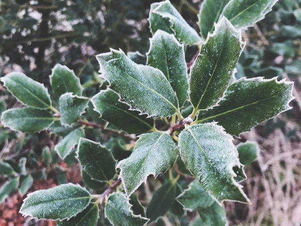 Growth Green Color Leaf Plant Plant Part Close-up Beauty In Nature Cold Temperature Winter No People Tranquility Frozen Succulent Plant Outdoors Cactus Day Focus On Foreground Nature Fragility