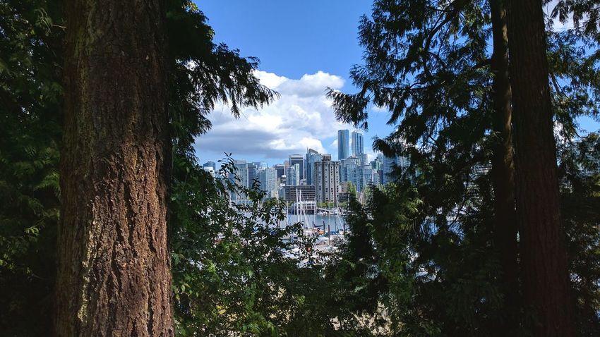 Vancouver Stanley Park Skyline Summer 2016