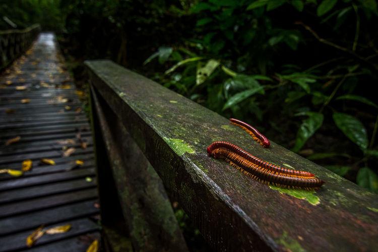 Close-up of centipedes
