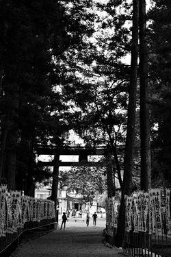 Light And Shadow EyeEm Best Shots - Black + White Black And White Kumano-Hongu-Taisha