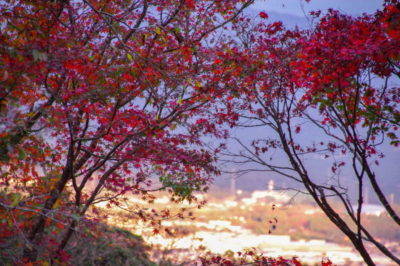 Low angle view of pink flowering tree against sky
