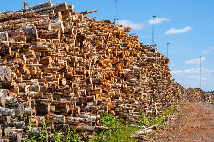 Stack of logs in forest against sky