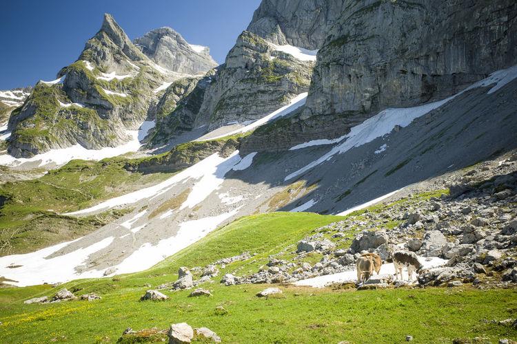 Mountain Mammal