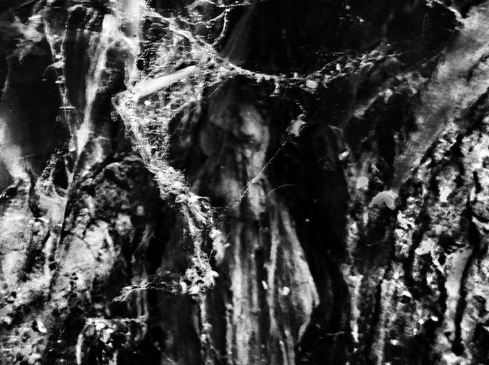 Full Frame Textured  Close-up Backgrounds Gloomy Tree Man Bark Growth Selective Focus Tree Tree Trunk Detail Of Tree Spooky Black And White Green Man Cobwebs On Tree Dark Woods Suggestive Natural Image