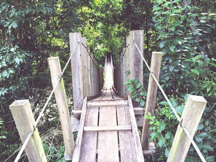 The Architect - 2016 EyeEm Awards Yourway Way Wood Wooden Bridge