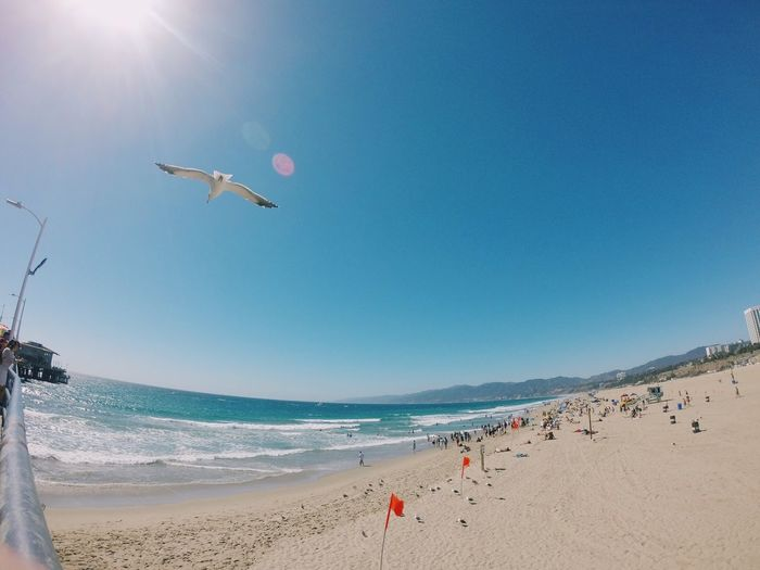 Seagull Flying Over Santa Monica Pier And Sea During Sunny Day