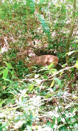 oh deer! |