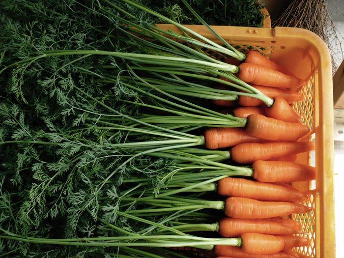 Vegitables Carrots Agriculture The Purist (no Edit, No Filter) made in Nagasaki. V-LUX1 35mm F2.8 de Breaktime!