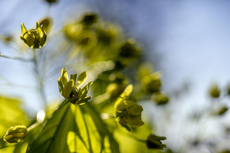 flowers Beauty In Nature Close-up Day Flower Flower Head Flowering Plant Focus On Foreground Fragility Freshness Green Color Growth Nature No People Outdoors Petal Plant Plant Part Selective Focus Tranquility Vulnerability  Yellow