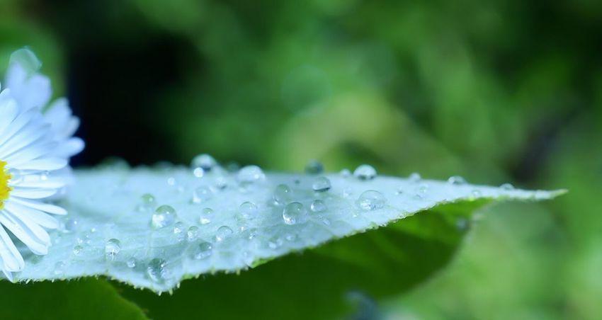 Macro Water Droplets Droplets