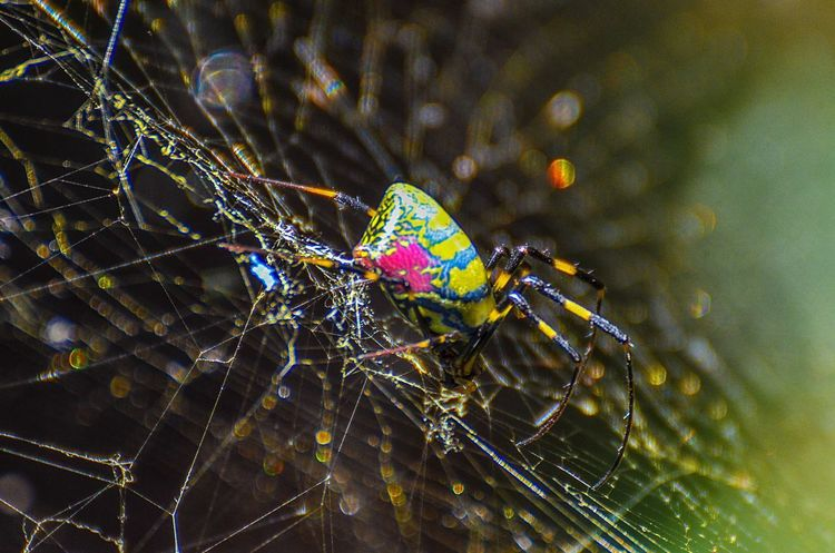 Close-up Nature Spider Web Multi Colored Fragility Outdoors Colorful Complexity Spider Insect