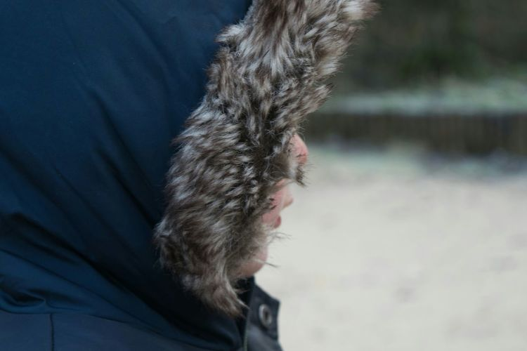 Boy HEAD Obscured Face Jacket Hood Fur Outside Winter Park Child Son 2-3 Years One Boy Toddler  One Child Real People Cold Outdoors Weather Nature Scotland Youth Of Today Season  Fun