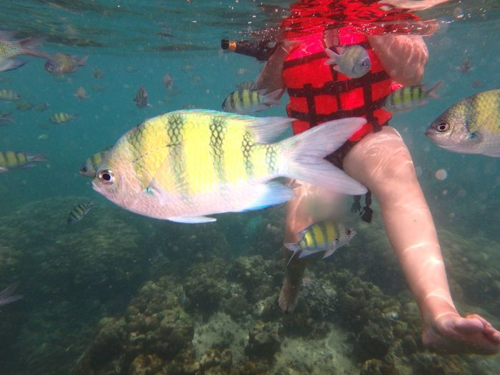 Second Acts Thailand Sea Underwater UnderSea Water Snorkeling Swimming Scuba Diving Adults Only People One Person Multi Colored Vacations Adult Full Length Day Adventure Sea Life Outdoors Only Women One Woman Only