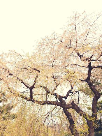 Seoul, South Korea Gina Ginatravels Travelessentials Travelbug Wanderlust Globetrotter Globetrotting Newdiscoveries Lifestyle Lgv30+ LGV30Plus ShotOnLGV30 LGV30photography Lifeisgood Holidays Seoul South Korea Sky Tranquility Tranquil Scene Scenics