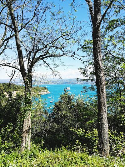 Tree Sky Nature Day Outdoors Beauty In Nature Water Freshness Morning Landscape Palmaria, Island Italy Italia