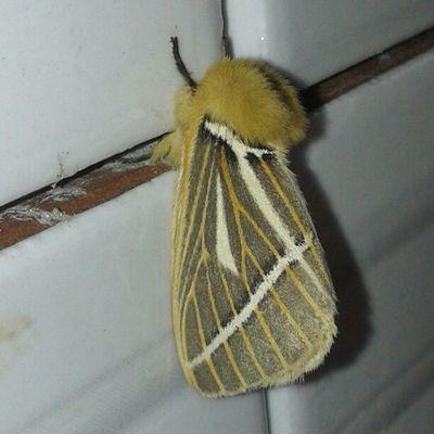 Bom dia mariposa peludinha!!! Hahaha