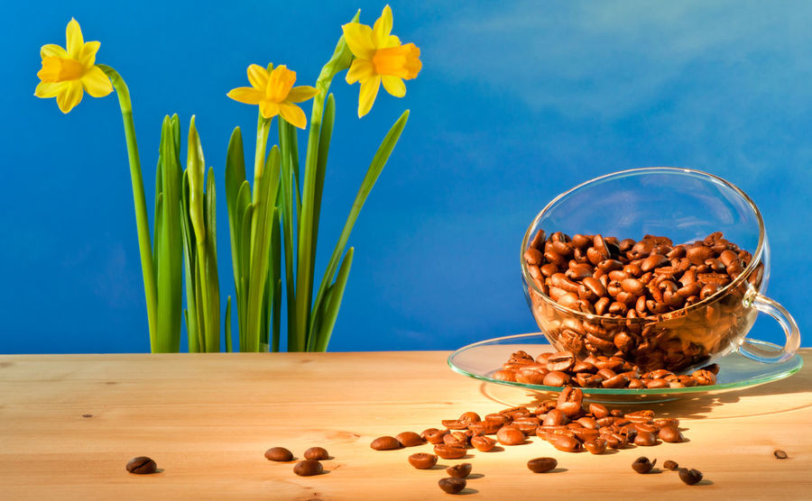 Coffee Morning Blue Bowl Break Close-up Coffee Beans Cup Cup Of Coffee Daffodils Day Flower Flowers Food Food And Drink Freshness Healthy Eating Indoors  Nature No People Sky Sunflower Table Yellow