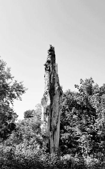 dead tree Dead