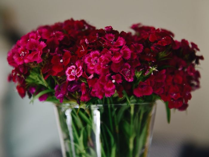 Close-up of red rose flowers in vase