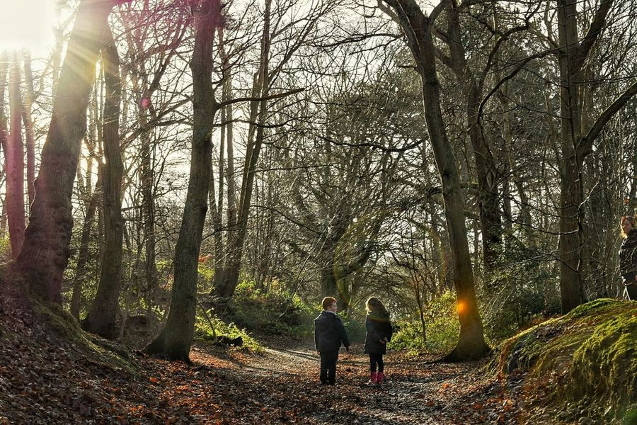 Taking Photos Beauty In Nature Nikon D3300 Eye For Photography Innocence Of Youth In The Woods Sunbeam Through The Trees If You Go Down To The Woods Today.. Afternoon Walk Winter Trees At One With Nature