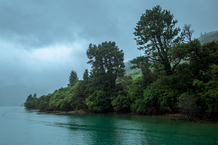 Blue Forest Green Lake Landscape Marlborough Sounds Nature New Zealand New Zealand Scenery No People Outdoors Rain Rainy Days Sky Social Issues Tree Water