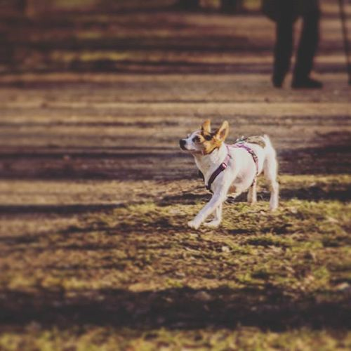 Aria proud to be a dog :D Proud Happydogs Walkinginthewind Dogs Dogsofinstagram Hundezone Hunde