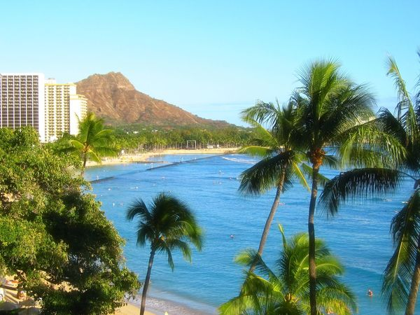 Scenes from Waikiki. Blue Coastline Day Hawaii Honolulu  Palm Trees Scenics Sea Surfing Tranquility Travel Destinations Waikiki Beach Water