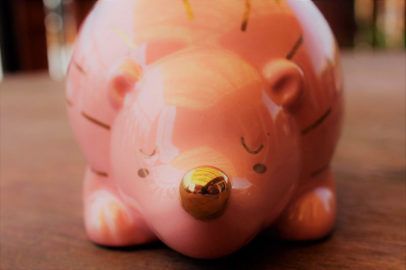 Animal Animal Representation Close-up Coin Bank Piggy Bank Pink Color Porcupine Single Object Toy