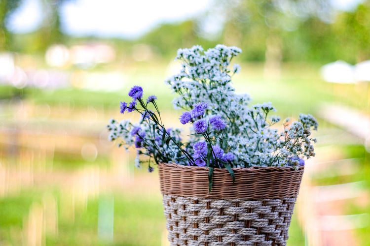 Close-up of flowering plant in basket