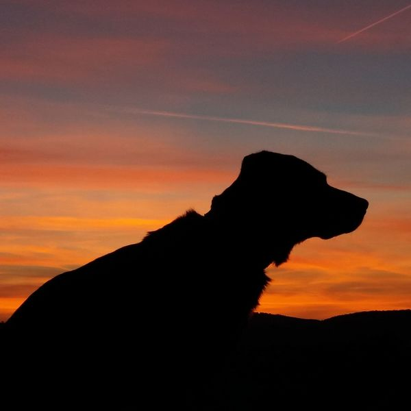 Silhouette Beauty In Nature Herbstspaziergang First Eyeem Photo Abendstimmung Herbstfarben Abendrot Popular Photos Playing With My Dog My Dogs Are Cooler Than Your Kids Schattenbild Playing With The Animals