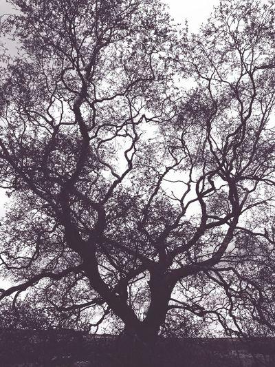 Tree Outline
