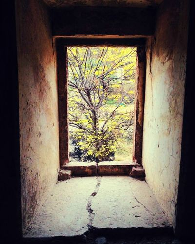 Scenery Shot Art Painting Of Nature Window Day Tree Indoors  Architecture Go Higher Nature