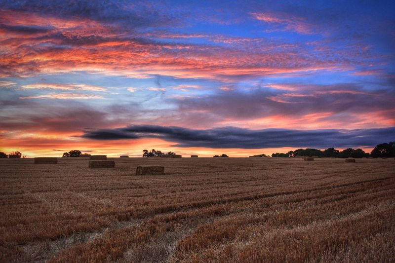 Scenic view of rural landscape at sunset