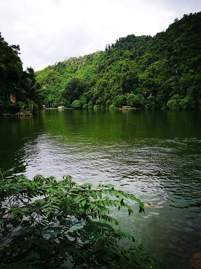 Water Lake Tree Beauty In Nature Malaysia Green Color