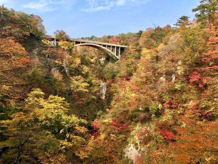 Narukokyo 🍁 Naruko Osaki Miyagi Tohoku Japan Photography Kurikoma Seminational Park Autumn Fall Autumn Colors Fall Colors Autumn Leaves Fall Leaves Autumn Collection Fall Beauty Bridge Mountain Enjoying The View Showcase October IPhone Photography 鳴子峡 宮城県 東北 紅葉 秋
