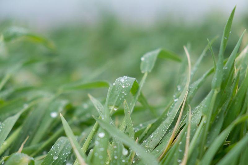 Raindrops in