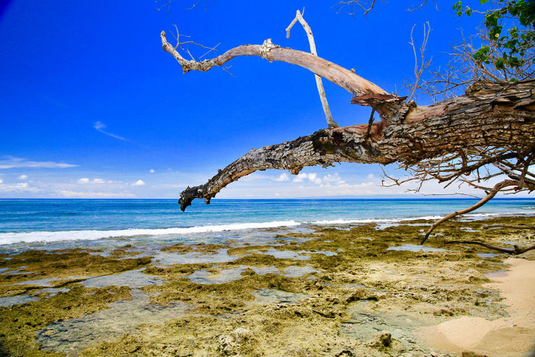 Morotai Island, North Moluccas, Indonesia Douglas MacArthur EyeEm Best Shots EyeEm Masterclass EyeEm Nature Lover EyeEmBestPics Holiday Morotai, North Moluccas, Indonesia Nature Photography Travel Photography Day Landsacpephotography No People Outdoors Sky Travel Destinations