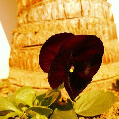 Insta Instalover Picoftheday Beautiful Nature Flowers,Plants & Garden First Eyeem Photo
