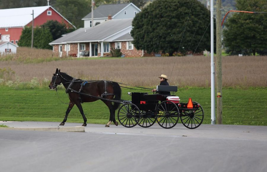 Amish gentleman on the way to the grocery store. Amish Way Of Life Amish Way Of Life Vintage Pennsylvania Beauty JGLowe Vintage Style Amish Horse Domestic Built Structure Domestic Animals Livestock Mammal Animal Animal Themes Real People Horse Cart Cart Mode Of Transportation One Animal