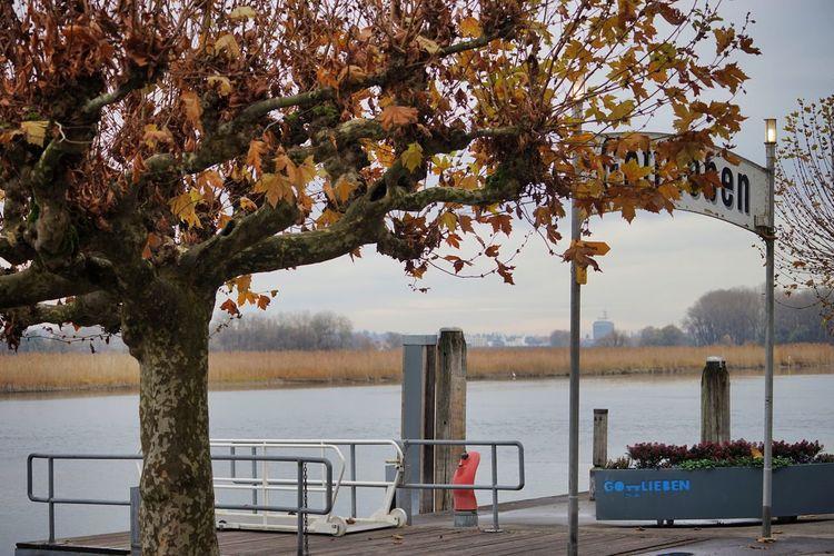 Berth Bodensee Bodenseeregion Bootssteg Gottlieben No People Outdoors Pier Thurgau Tree Untersee Water