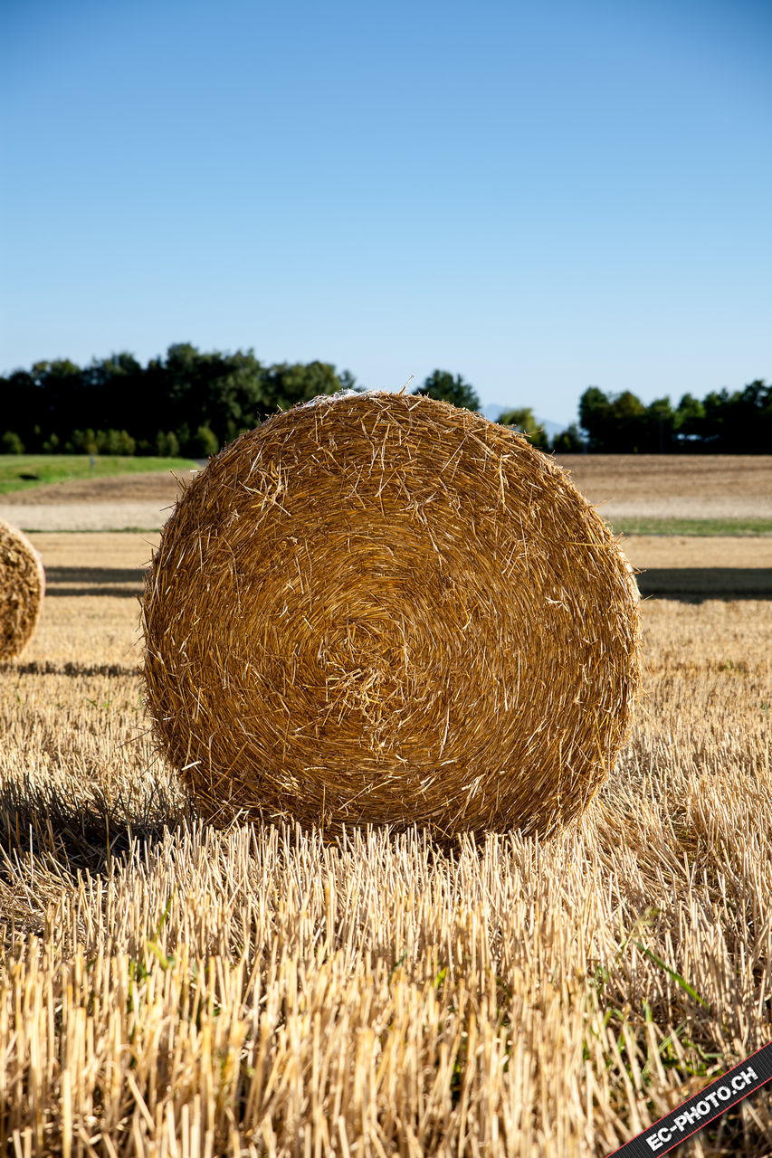 bale, agriculture, hay, hay bale, field, harvesting, farm, rural scene, crop, haystack, rolled up, nature, tranquility, tranquil scene, day, outdoors, landscape, no people, beauty in nature, clear sky, scenics, grass, sky