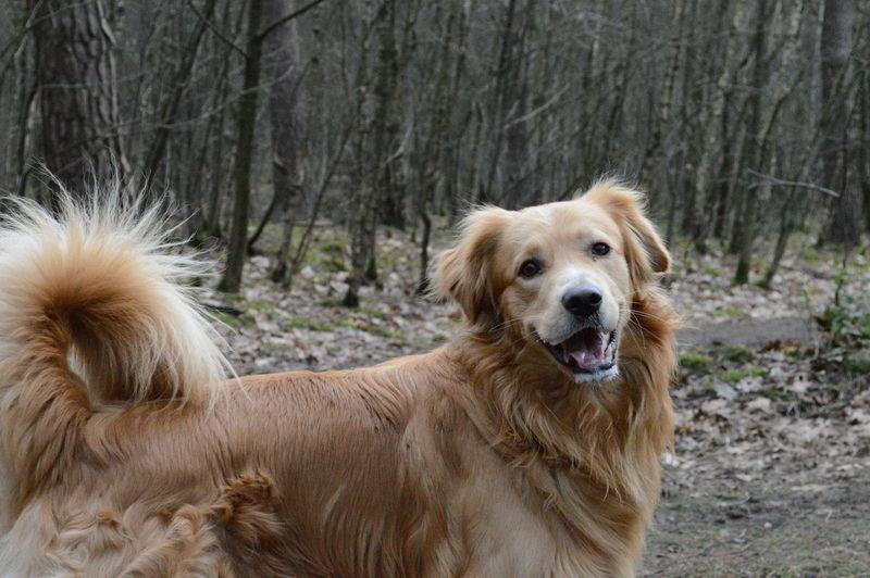 Dog Happy Smilling