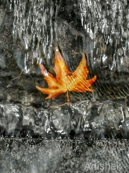 Leaf 🍂 Goldenleaf Water Under Flowing Water Srinagar Kashmir Mappletree Mappleleaf Myclick💚