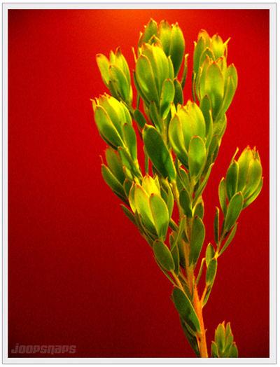 Botany Close-up