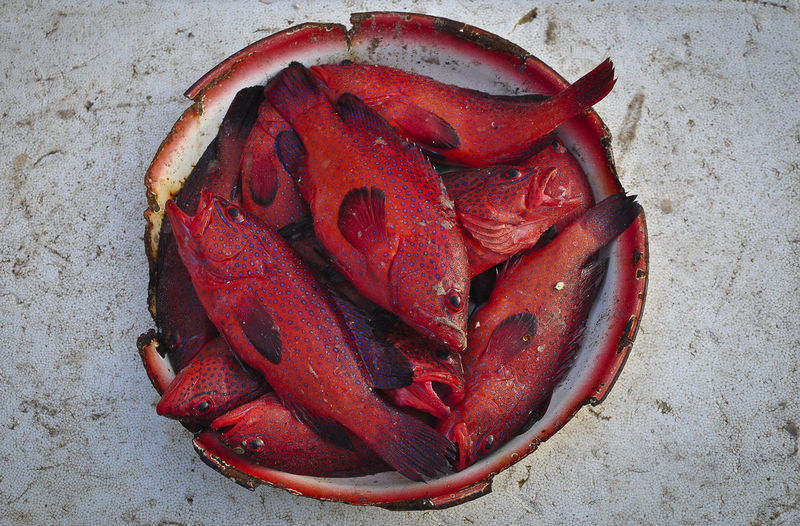 Red fish in a bowl Bowl Of Fish Catch Day Fish Food Freshness Outdoors Red