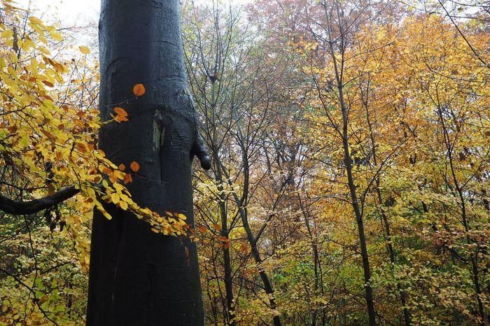 Männlicher Baum Baum Männlich  Natur Formen Der Natur