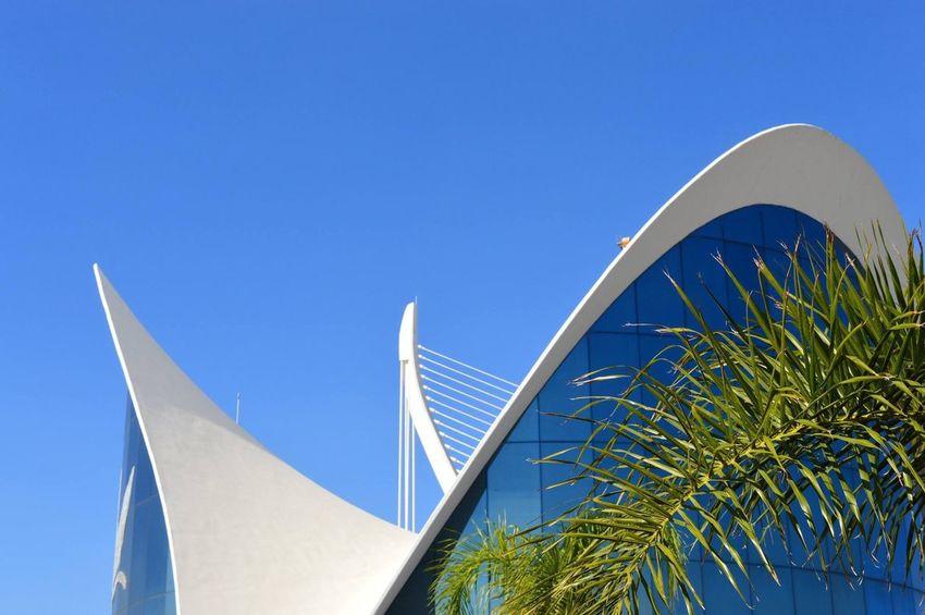 Blue Architecture Clear Sky No People Built Structure Day Outdoors Building Exterior Sky Close-up Ciudad De Las Artes Y Las Ciencias Art Valencia, Spain Calatrava