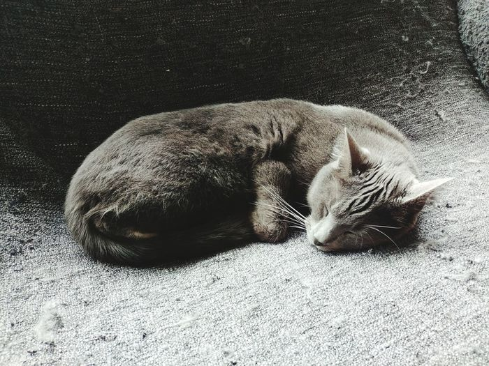Home sweet home Pets Relaxation Sand UnderSea Sea Life Lying Down Close-up Cat Feline At Home Domestic Cat Sleeping